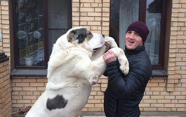 Денис Лебедев прокомментировал ситуацию с Анатолием Быковым.